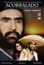 Acorralado (1984) afişi