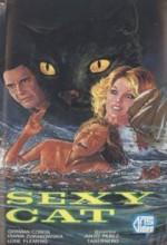 Seksi Kedi