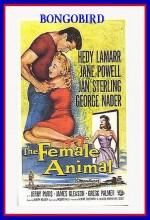The Female Animal (1958) afişi