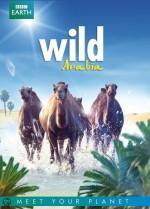 Wild Arabia (2013) afişi