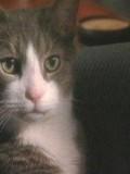 W. Axl Rose The Cat
