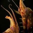 Hayat: Ağaçların Altındaki Böcekler Resimleri