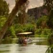 Timsah: Nehrin Dişleri Resimleri