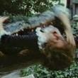 Alligator Resimleri