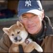 Hachi: Bir Köpeğin Hikayesi Resimleri