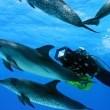 Okyanus Dünyası 3D Resimleri