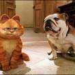 Garfield 2 Resimleri