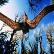 T-REX: Dinozorlar Devrine Dönüş Resimleri