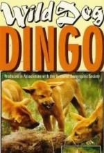 Dikaya Sobaka Dingo (1962) afişi