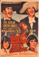 Gallo Corriente, Gallo Valiente (1966) afişi