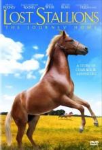 Kayıp At:yolculuk Evi