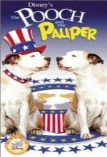 Köpek Başkan Olursa (2000) afişi