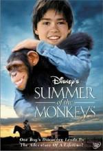Maymunlarla Bir Yaz