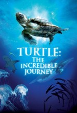 Turtle: The ıncredible Journey
