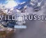 Vahşi Rusya: Sibirya  afişi