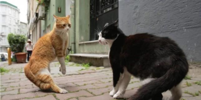 'Kedi' belgeseli Time'ın 'En iyi 10 film' listesine girdi