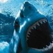 Jaws Resimleri