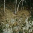 Kokoda Resimleri