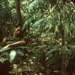 Tropikal Hastalık Resimleri