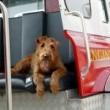 Firehouse Dog Resimleri