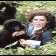 Sisteki Goriller Resimleri