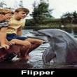 Flipper Resimleri