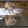 Wolf Lake Resimleri