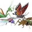 Kelebeğin Hikayesi + Büyülü Okyanus Resimleri