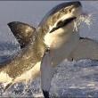 When Sharks Attack! Resimleri